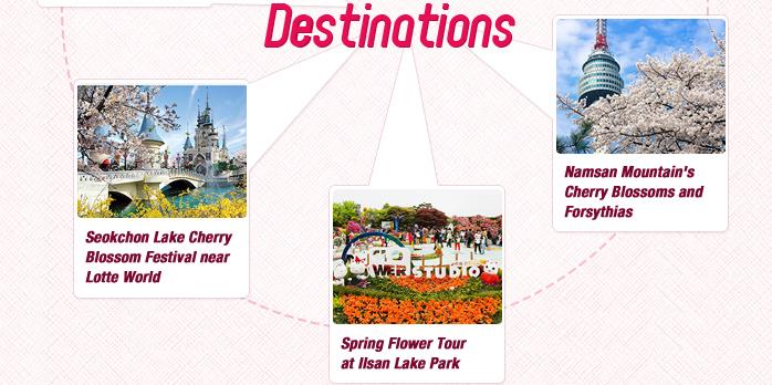 Spring Flower Sites in Seoul